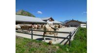 Führung zur Alp Bella