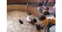 Zauberhaftes Tälli : Besuch auf dem Bauernhof