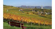 öffentliche Führung «Reben und Wein» / Herbstfeste