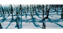 öffentliche Führung «Reben und Wein» / Adventsfenster