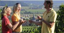 öffentliche Führung «Reben und Wein» / Laubarbeiten