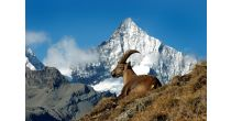 Film Screening «Zermatt Fauna & Flora»