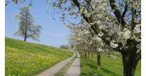 Walk from Küssnacht am Rigi back to Weggis