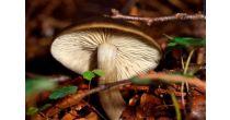 Pilze entdecken, sammeln und bestimmen