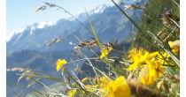 Fête de l'Amicale Botanique le dimanche 12 juillet 2015