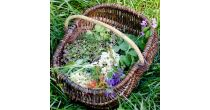 Workshop discovered on the edible and medicinal wild plants