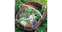 Ateliers découvertes sur les plantes sauvages comestibles et médicinal