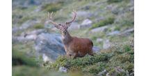 Un Été à la montagne, A la découverte de la faune anniviarde