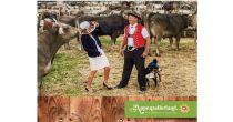 Wer hat die schönste Kuh im Appenzellerland?