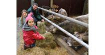 Kühe füttern, melken und Buurezvieri