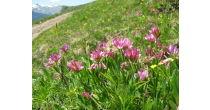 Botanische Exkursion ins Naturschutzgebiet Suldtal