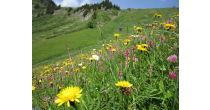 Botanische Exkursion im Naturschutzgebiet Suldtal