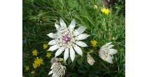 Randonnée thématique : Les plantes qui soignent