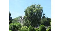 Villa Boveri - Parkführung