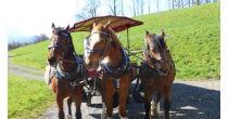 Horse-Drawn Carriage Ride in Weggis
