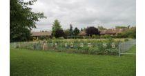 Visite d'un potager urbain et d'un jardin thérapeutique