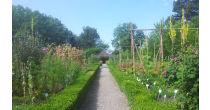 Oase oder Kraut? Der Schlossgarten als «lebendige Vitrine»