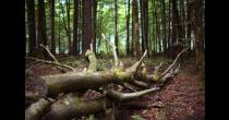 Der lebendige Wald