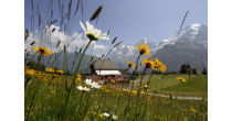 Messa di montagna a Allmendhubel