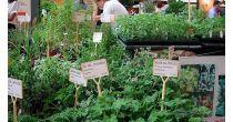 Journées découvertes des plantes sauvages comestibles