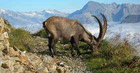 Ibex trek Rothorn