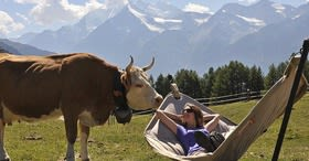 Enjoy Summer in Valais