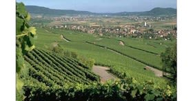 Wine weekend in Schaffhauserland