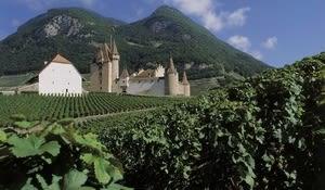 Vine and Wine Museum